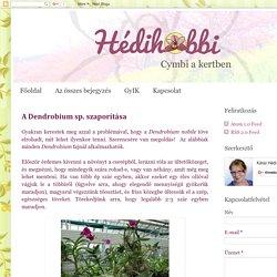 Hédihobbi: A Dendrobium sp. szaporítása