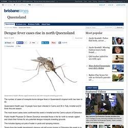 Dengue fever cases rise in north Queensland