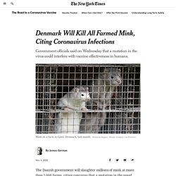 Denmark sacrificará la población de visones de granja