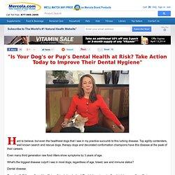 Dog Dental Bone & Gentle Dental Bones | Healthy Dog Treats