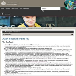 Department of Agriculture Avian Influenza or Bird Flu