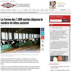 La Ferme des 1.000 vaches dépasse le nombre de bêtes autorisé
