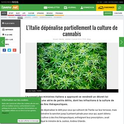 L'Italie dépénalise partiellement la culture de cannabis