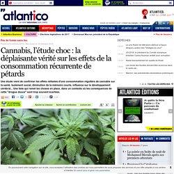Cannabis, l'étude choc: la déplaisante vérité sur les effets de la consommation récurrente de pétards