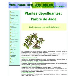 plantes d polluantes pearltrees. Black Bedroom Furniture Sets. Home Design Ideas
