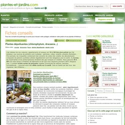 Plantes dépolluantes (chlorophytum, dracaena...)