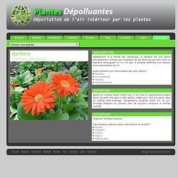 Air interieur pearltrees - Depollution par les plantes ...