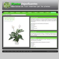 Les petites choses pearltrees - Depollution par les plantes ...
