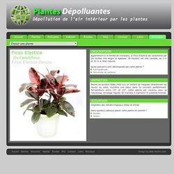 Plantes interieur pearltrees - Depollution par les plantes ...