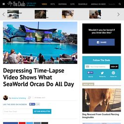 Depressing Time-Lapse Video Shows What SeaWorld Orcas Do All Day