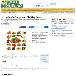 An In-Depth Companion Planting Guide