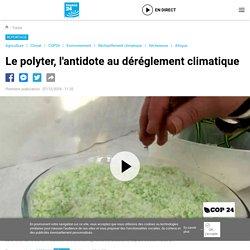 Le polyter, l'antidote au déréglement climatique