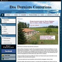 Accueil - Elevage Des Derniers Centurions - éleveur de chiens Berger Belge Malinois de travail