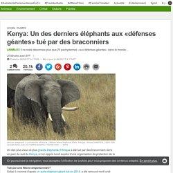 Kenya: Un des derniers éléphants aux «défenses géantes» tué par des braconniers