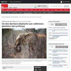 Un des derniers éléphants aux «défenses géantes» tué au Kenya