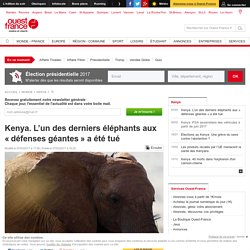 Kenya. L'un des derniers éléphants aux «défenses géantes» a été tué