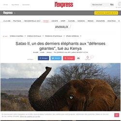 """Satao II, un des derniers éléphants aux """"défenses géantes"""", tué au Kenya"""