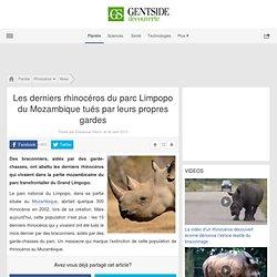 Les derniers rhinocéros du parc Limpopo du Mozambique tués par leurs propres gardes