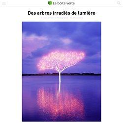 Des arbres irradiés de lumière