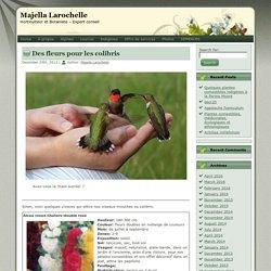 Des fleurs pour les colibris