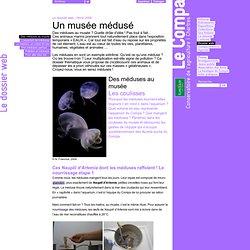 Des méduses au musée - Le Compa