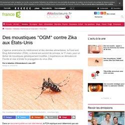 Des moustiques OGM contre Zika aux États-Unis