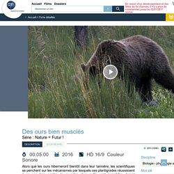 Des ours bien musclés