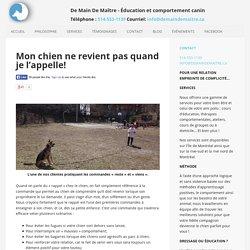 Des solutions pour un chien qui fugue