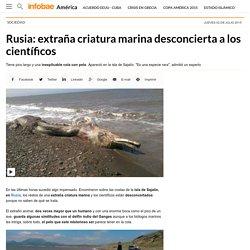 Rusia: extraña criatura marina desconcierta a los científicos