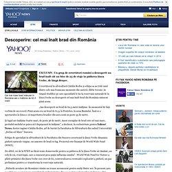 Descoperire: cel mai înalt brad din România