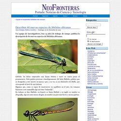 Describen 60 nuevas especies de libélulas africanas