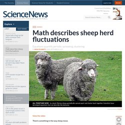 Math describes sheep herd fluctuations