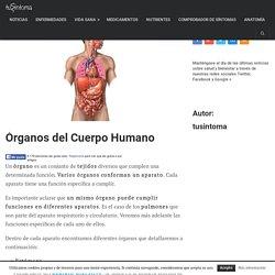 Órganos del Cuerpo Humano - Descripción y funcionamiento.