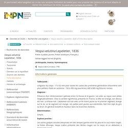 Vespa velutina-Frelon à pattes jaunes, Frelon asiatique - Description, fiches détaillées