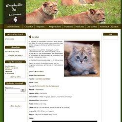 Le chat Fiche de description - Encyclopédie des animaux