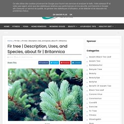 Description, Uses, and Species, about fir