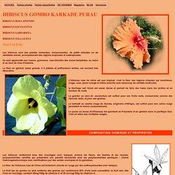 Les Hibiscus, description botanique et utilisation en médecine douce et traditionnelle de ces plantes médicinales tropicales