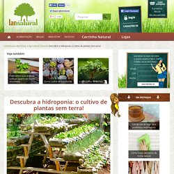 Descubra a hidroponia: o cultivo de plantas sem terra! - Lar Natural