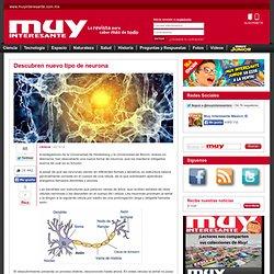 Descubren nuevo tipo de neurona -Muy Interesante México