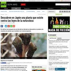 Descubren en Japón una planta que existe contra las leyes de la naturaleza