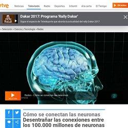 Desentrañar las conexiones entre los 100.000 millones de neuronas del cerebro