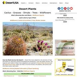 Desert Plants - Cactus - Wildflowers - Flora