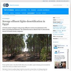 Sewage effluent fights desertification in Egypt