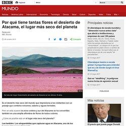 Por qué tiene tantas flores el desierto de Atacama, el lugar más seco del planeta - BBC Mundo