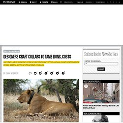 Designers Craft Collars to Tame Lions, Costs