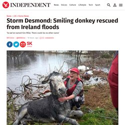 Storm Desmond: Smiling donkey rescued from Ireland floods