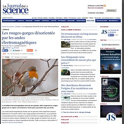 Les rouges-gorges désorientés par les ondes électromagnétiques › Zoologie