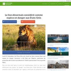 Le lion désormais considéré comme espèce en danger aux Etats-Unis