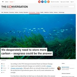 We desperately need to store more carbon – seagrass could be the answer