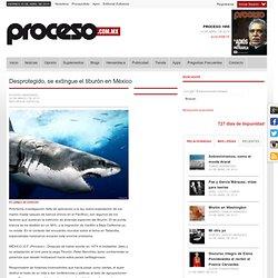 Desprotegido, se extingue el tiburón en México